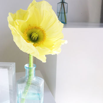 Yellow poppy photographed at Push PR, The Arts Building, Finsbury Park. Do social media workshops work?